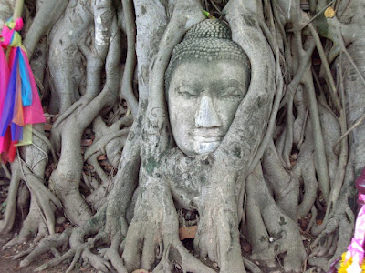 Stone Buddha head in a tree Ayutthaya, Thailand