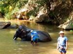 Maesa elephants